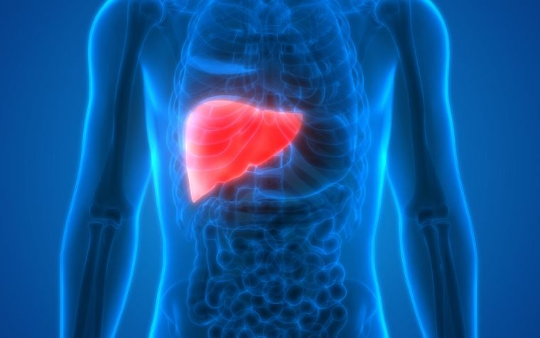 Fatty liver disease therapy